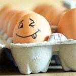 Цех по обработке яйца -основные моменты организации.