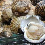 Морской гребешок — первичная обработка, технология приготовления.