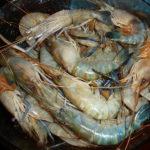 Креветки — первичная обработка,технология приготовления
