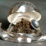 Икра моллюсков –характеристика,виды,применение в кулинарии